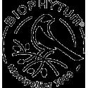 Biophytum